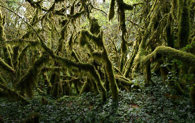 Forêt humide du Bugey