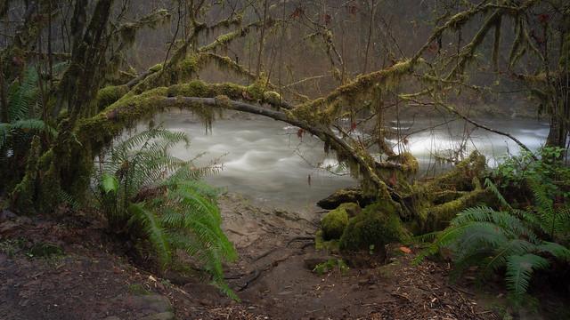 Mossy Archway