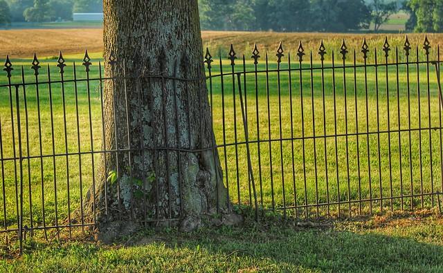 Fence line, Mennonite cemetery