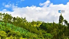 Árboles vestidos de colores