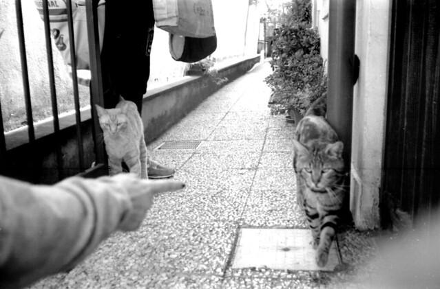 Parlando di gatti