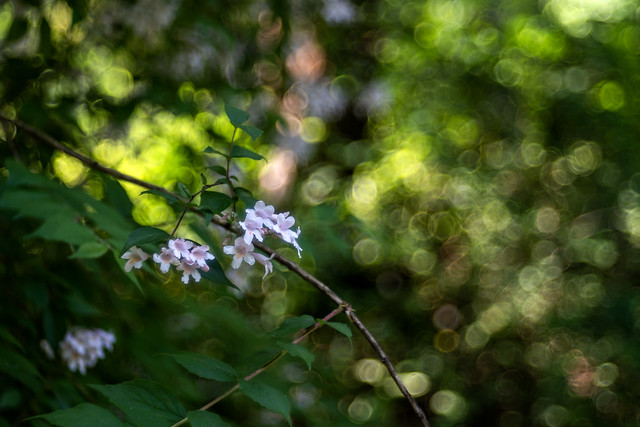 Schattenblüte