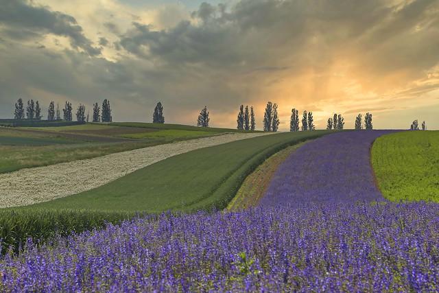 saxon tuscany