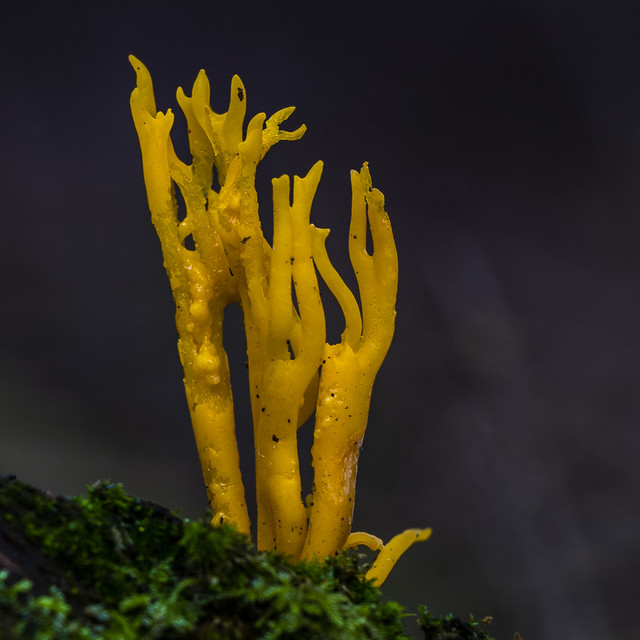 Coral of the forest