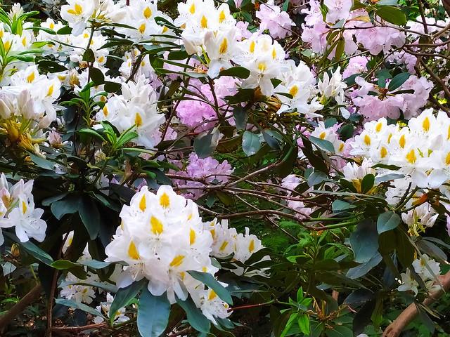 203 - Paris en Mai 2021 - Bois de Vincennes, Parc Floral