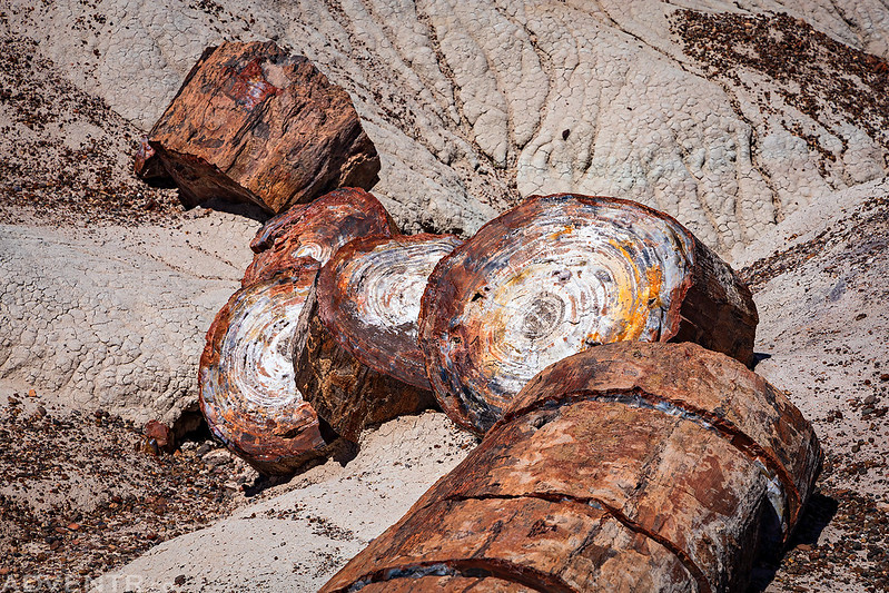 Crystal Forest Petrified Log