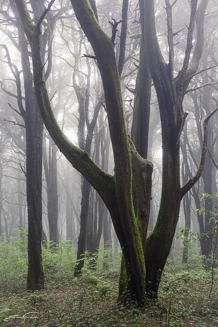 Mist… (Explore)