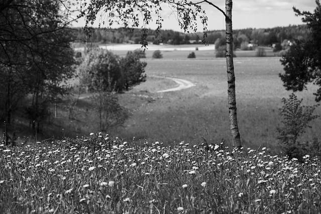 Juni i Roslagen