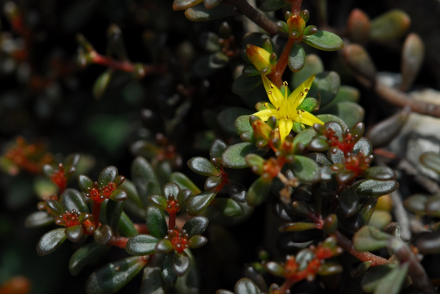 高山深谷得天獨厚 以太魯閣地名為名的植物 近9成是台灣特有種
