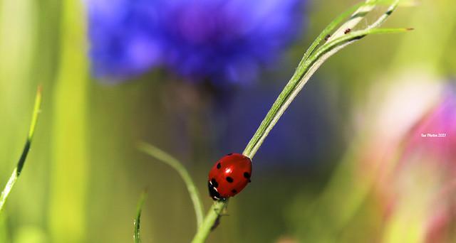 Miss ladybug ⭐In Explore