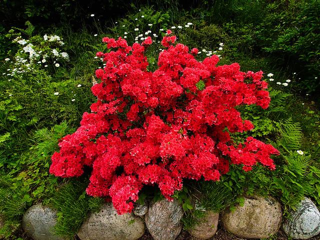 A red bush
