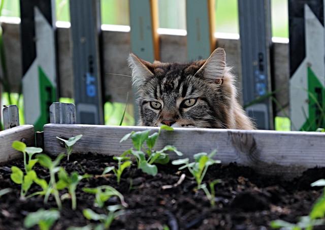 garden inspector