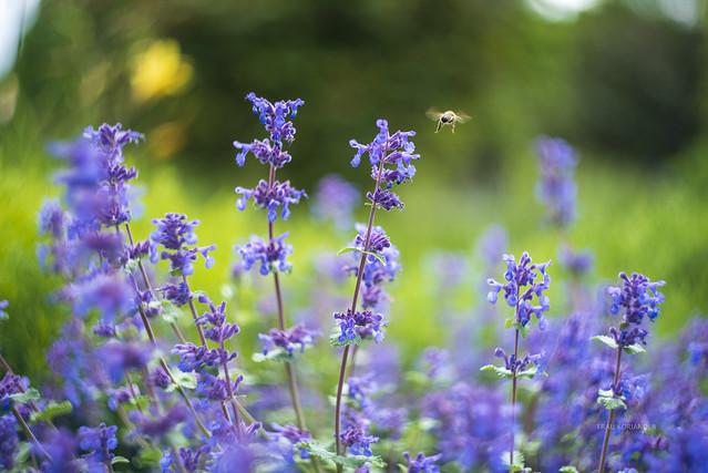 HBW 23/2021: bee happy
