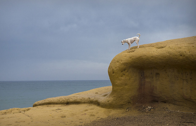 White dog over yellow rock (Aguilas, 2021)