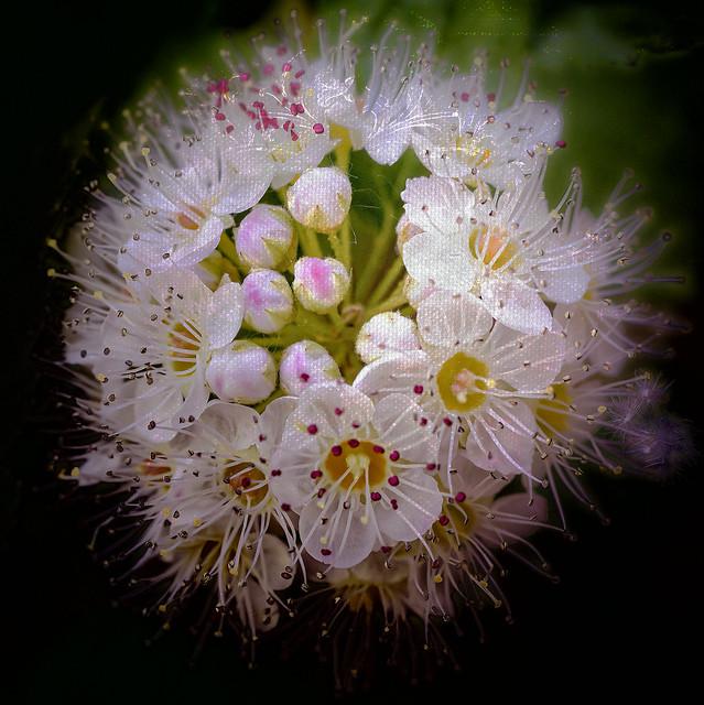 June Blossoms
