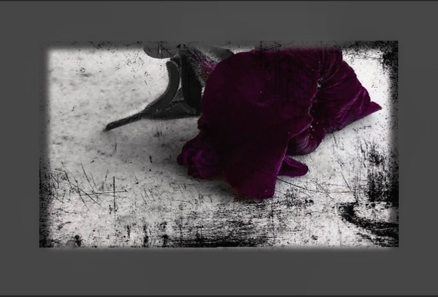 Drama in the garden; a dead flower and an alive ant : b