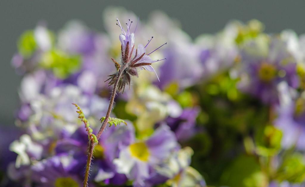 Wild Flowers @ SE22