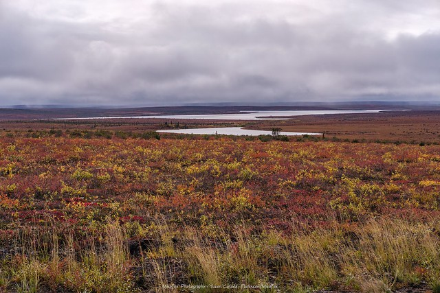 Rain Clouds Hanging Over the Tundra