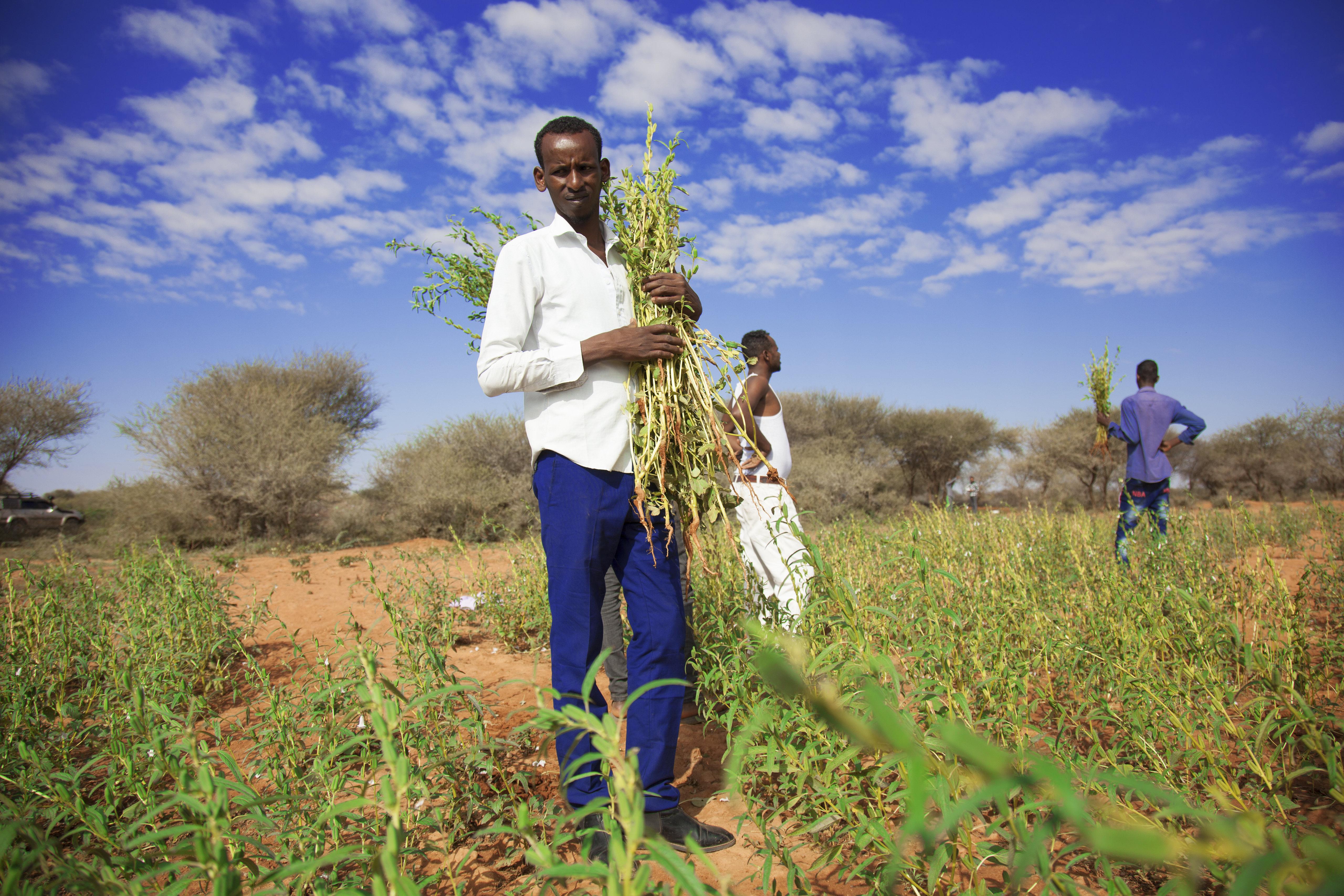 Somalia | Strengthening the resilience of livelihoods in Somaliland