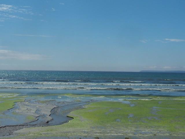 Algues vertes..un problème écologique très grave