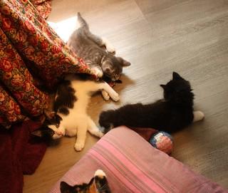 2021-06-10 Kittens