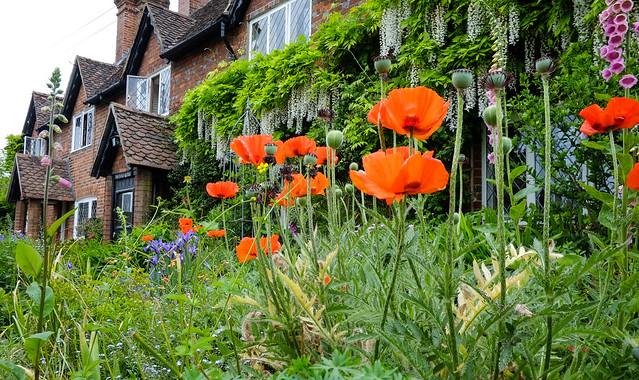 Cottage Garden Kent