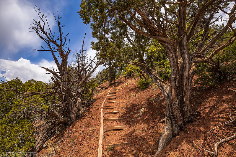 Trail to the Rim