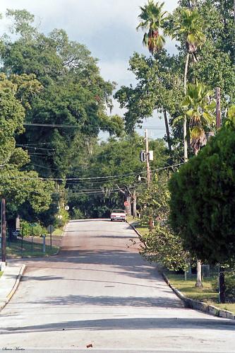 street trees florida neighborhood palmtrees 1986 mountdora