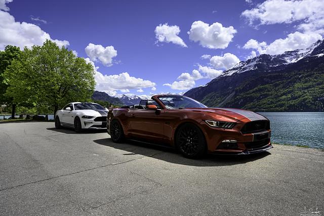 Mustangs at the Lake Brienz - Bern - Switzerland