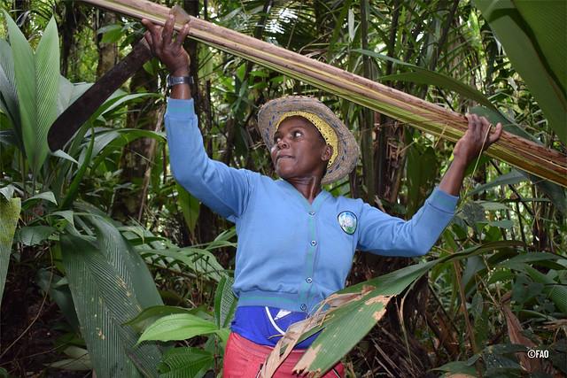 Hacia una agricultura sostenible y resiliente en América Latina y el Caribe