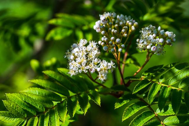 More June flowers in the garden