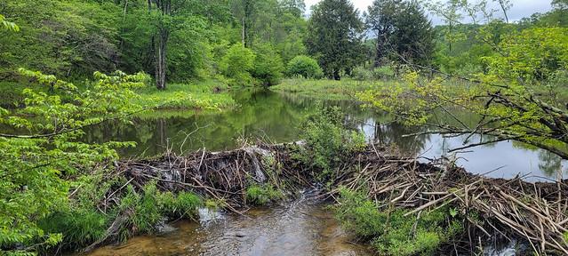 South Branch Tionesta Creek