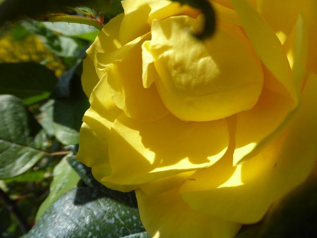 Yellow beauty!!  P1110671