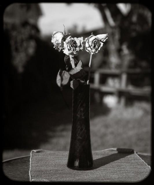 Roses - paper negative