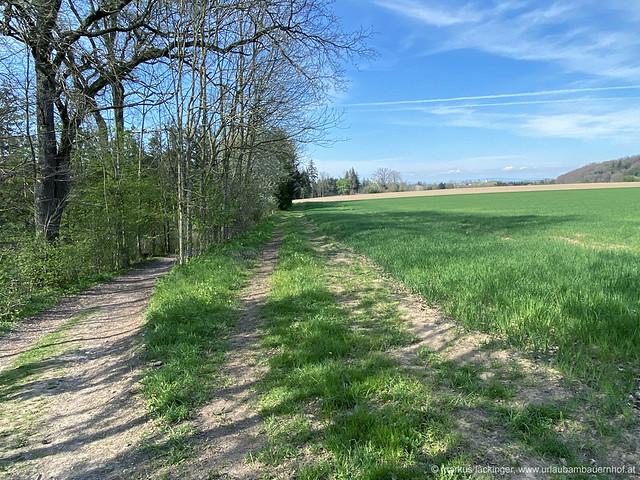 Wanderung in Bad Wimsbach-Neydharting / Oberösterreich
