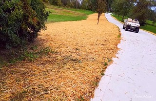 Drive Way Project | Straw Over New Seed