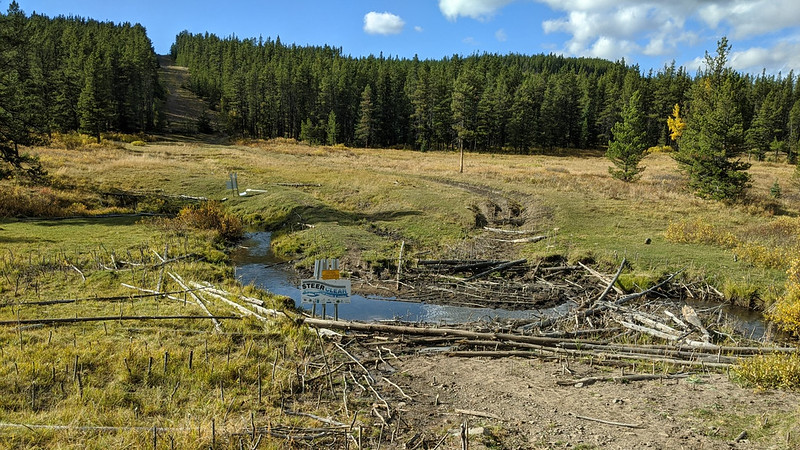 Cows and Fish restoration work at Silvester Creek. Photo courtesy of Cows and Fish.