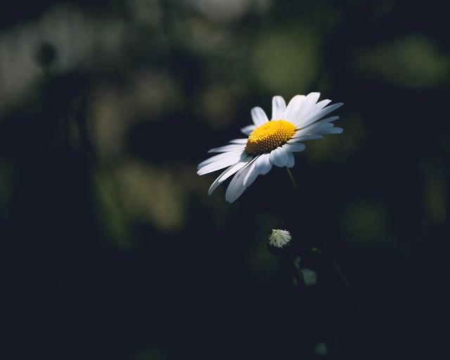 White flower | Witte bloem