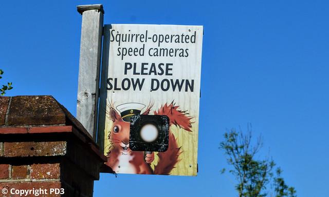 Speed Camera Squirrel