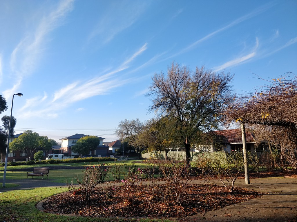 Wispy clouds, blue skies, Winter rose bushes at Wattle Grove Reserve