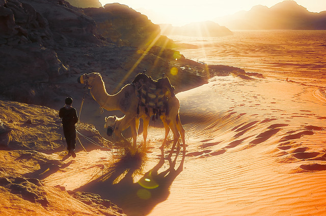 Boy and his camels