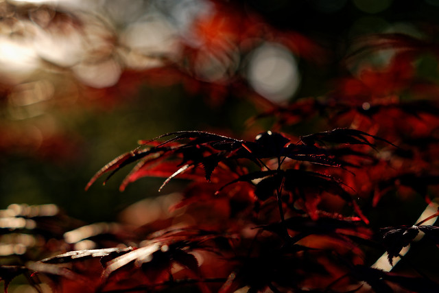 playing with light, bokeh and leaves