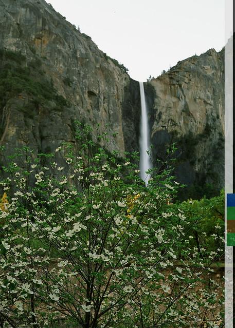 Bridalveil Fall with Dogwood 2 (Fuji Velvia 50 version)