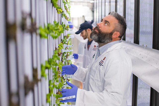 Daniel Wells inspects plants in the vertical farm shipping container