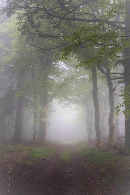 Un jour de pluie et de brouillard...Juin 2021