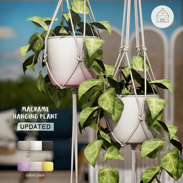 hive // *updated* macrame hanging plant | fifty linden friday