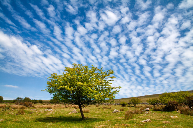 A tree and flaky clouds