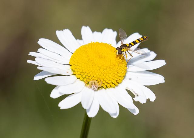 La symbiose fleur insecte