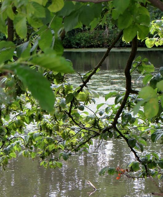 L'étang, château de Vishering, Lüdinghausen, arrondissement de Coesfeld, Rhénanie du Nord-Wetsphalie, Allemagne.