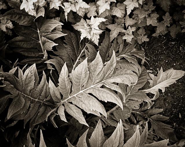 Leaf Flow